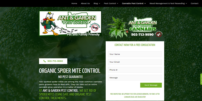 Everything you need to know about weed spider mites!!
